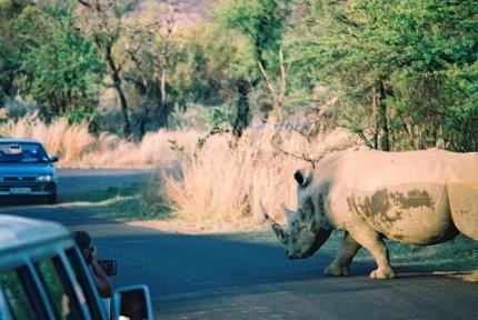 Rhino Pilansberg