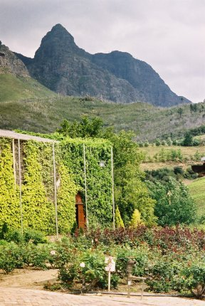 Stellenbosch Winery