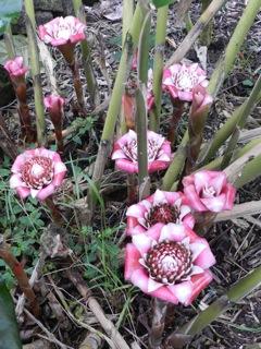 Flower in Art's garden