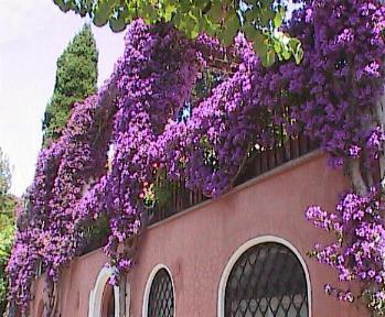 Capri-HouseWithBouganvillea