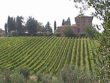 Chianti-Villa And Vineyard From Villa Machiavelli